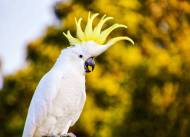Cheeky cockatoo.